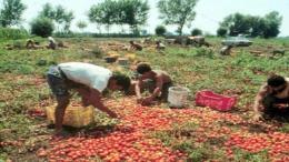 migranti lavoro sardegna