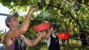 decreto flussi agricoltura manodopera