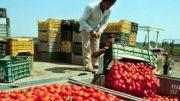 regolarizzazione migranti pd leu italia viva M5S
